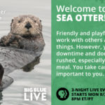 'Big Blue Live': A Celebration of Marine Wildlife
