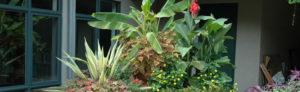 What We Watch: Garden expert Melinda Myers