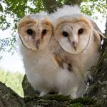 Innovating with Owls