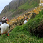 Puffin-opolis: Explore Animal Cities with 'Nature'