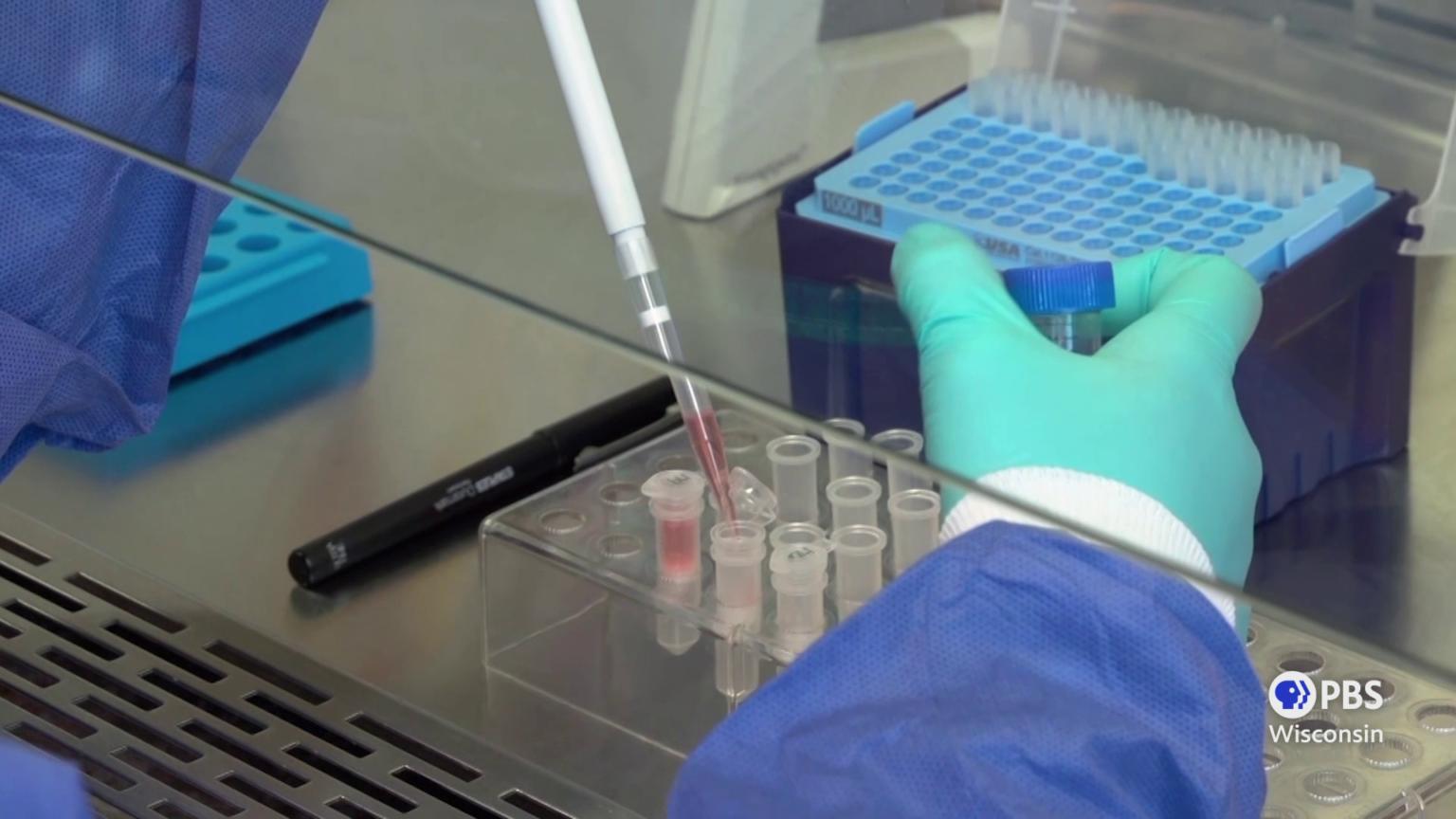 scientist's hands pipette liquid into viles