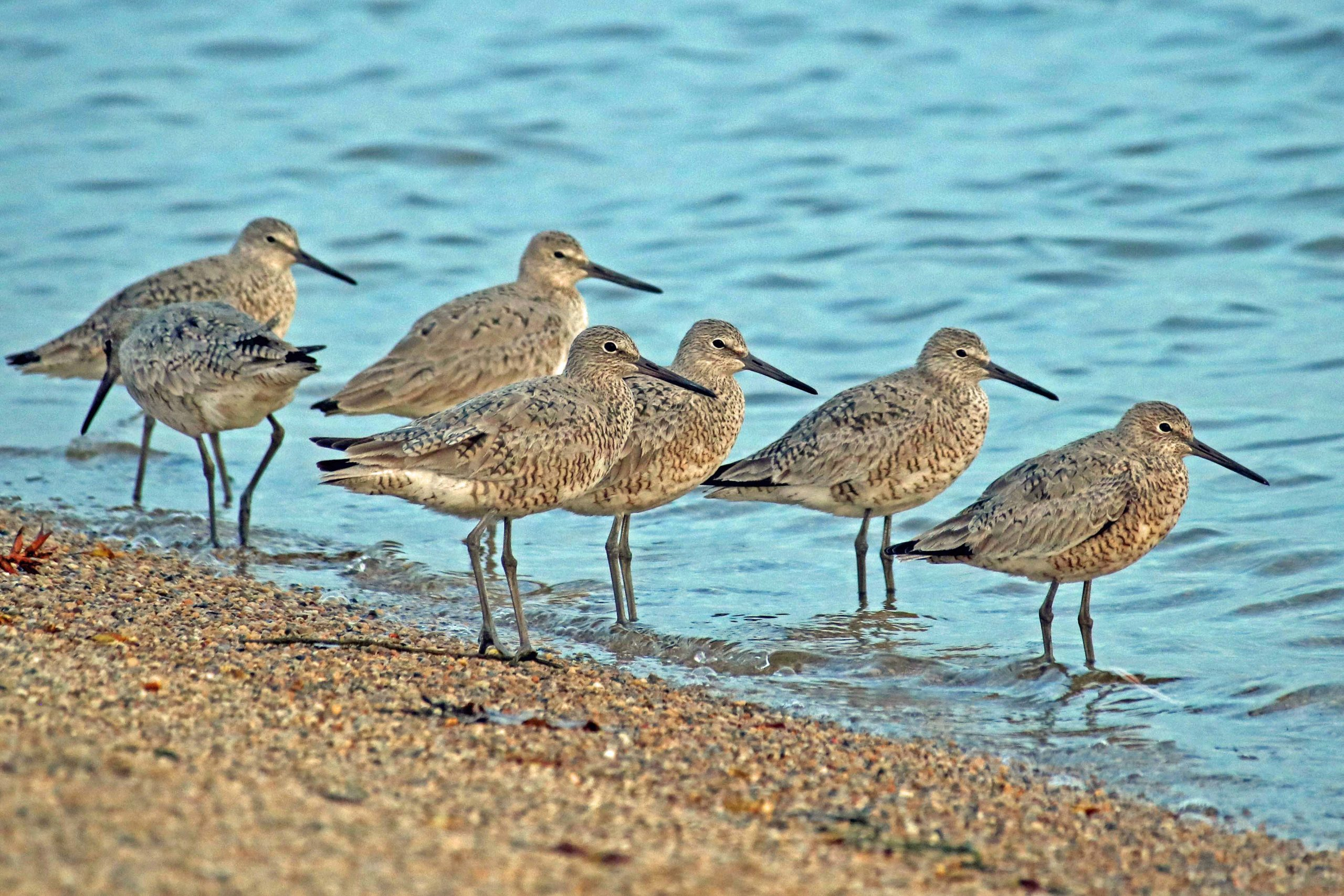 Birds standing on the shore