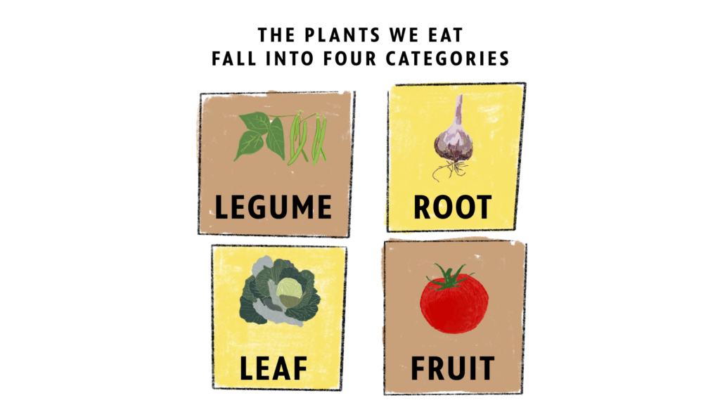 A drawing of plants that humans eat split into four categories
