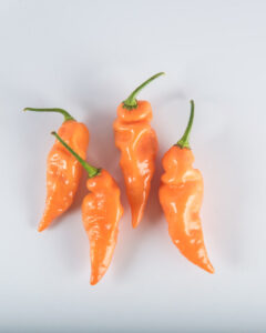 four orange peppers on white background