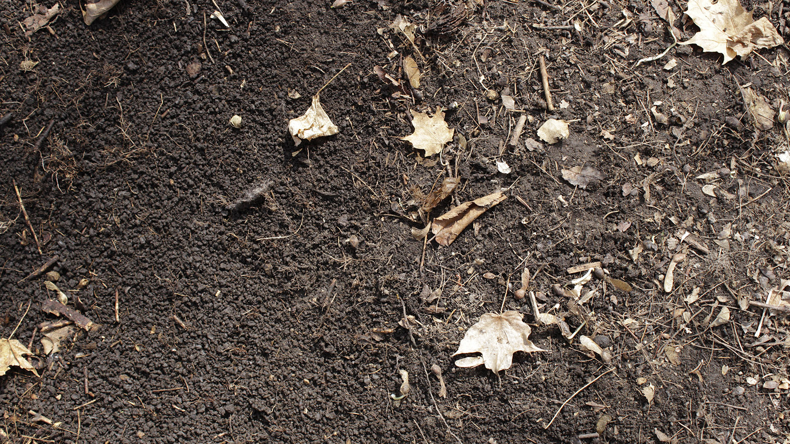 Soil on a forest floor with two different textures