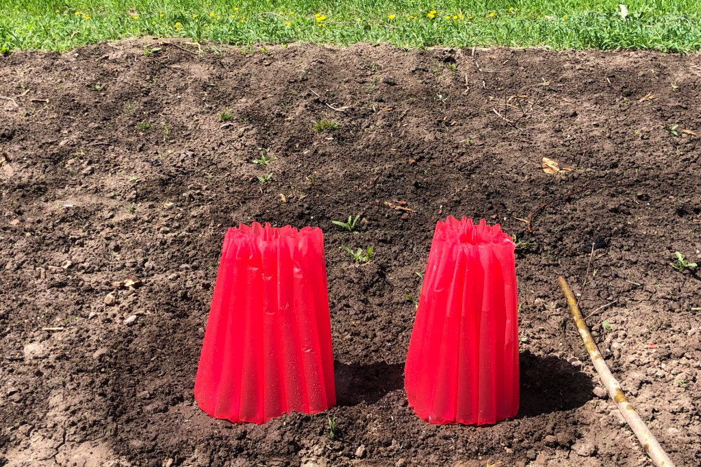 bare soil with small plastic greenhouses