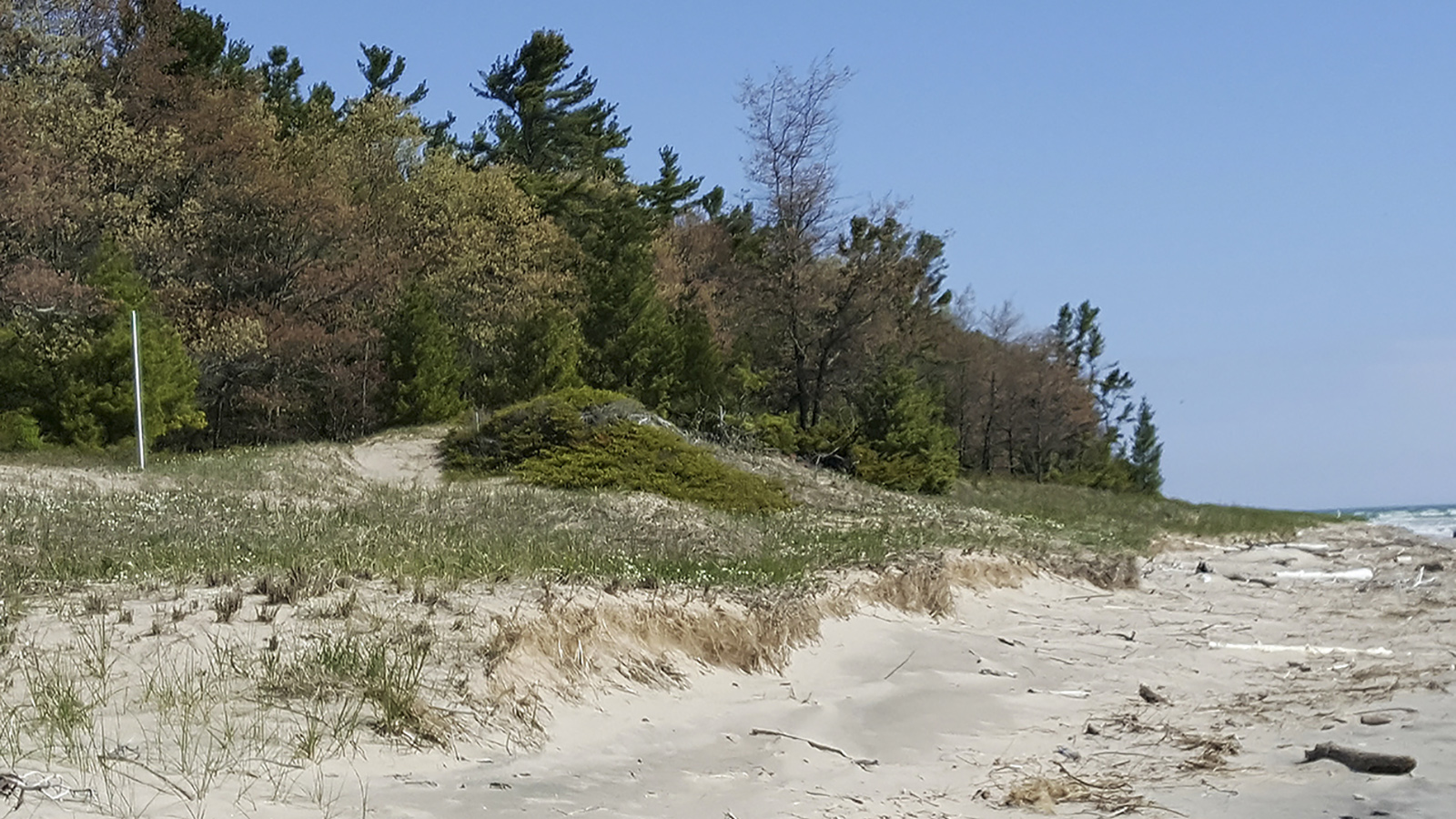 Sandy beach with trees in background and vertical pipe marking a proposed golf course hole