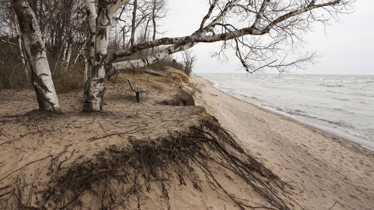 Park bench overlooking lakeshore and eroding sand beach with exposed roots
