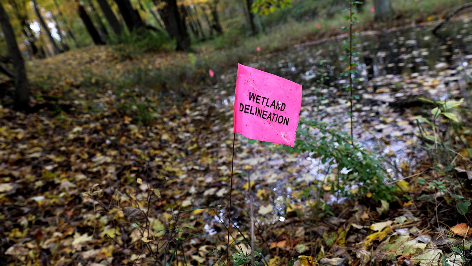 "A short plastic flag reading ""wetland delineation"" adjacent to pond"