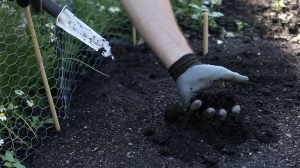 Let's Grow Stuff: What's the Dirt on Soil