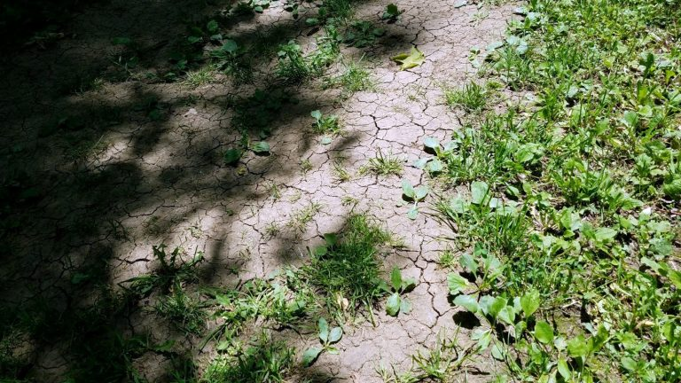 Cracks in dry soil on footpath surrounded by green grass and weeds