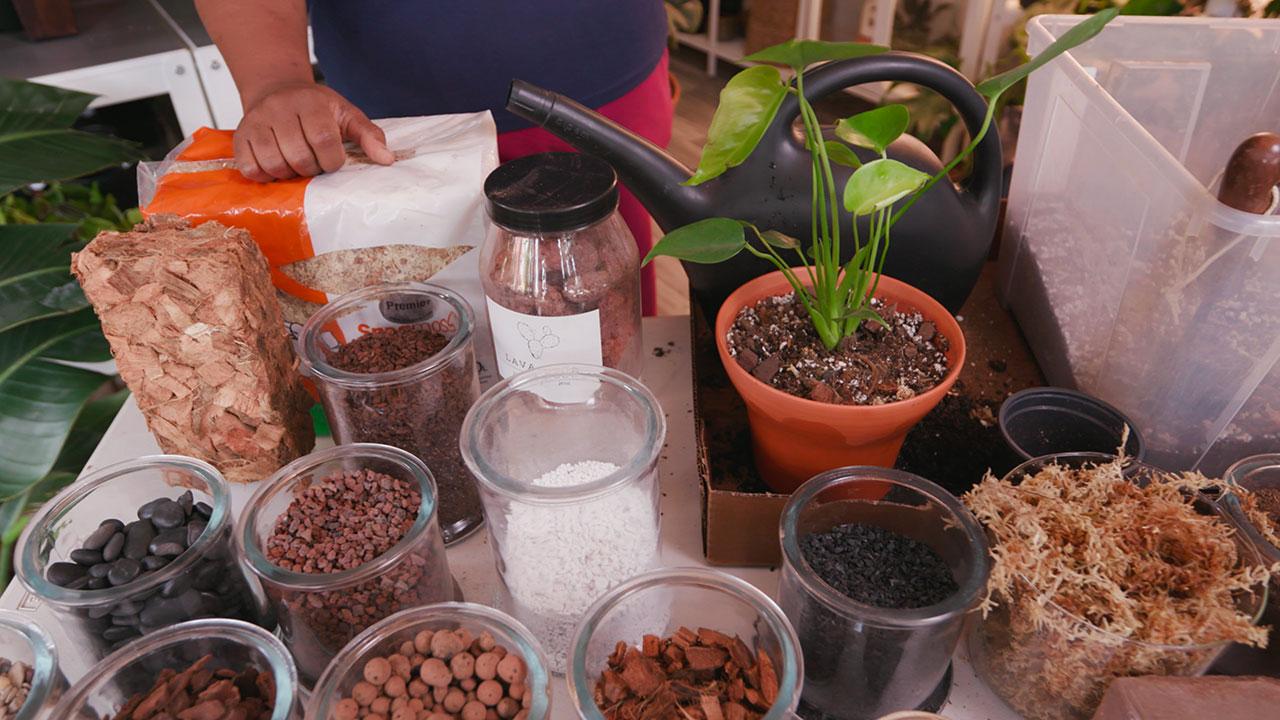Let's Grow Stuff - Repotting Your Indoor Plants